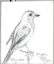 2010.5.1.European.Robin
