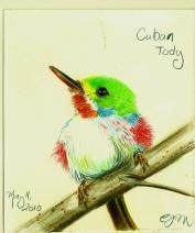 2010.5.11 Cuban Tody