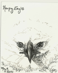 2010.5.11 Harpy Eagle