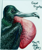 2010.5.14 Great Frigate