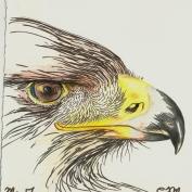 2010.5.17 Golden Eagle