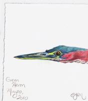 2010.5.20 Green Heron