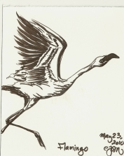 2010.5.23 Flamingo
