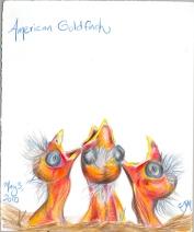 2010.5.3.American.Goldfinch