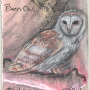 2010.5.4.Barn.Owl