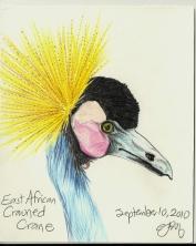 2010.9.10 East African Crowned Crane