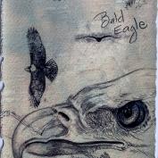 2010.9.12 Bald Eagle