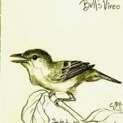2010.9.13 Bells Vireo