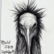 2010.9.14 Bald Ibis