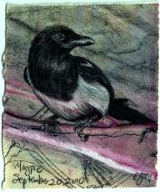 2010.9.20 Magpie