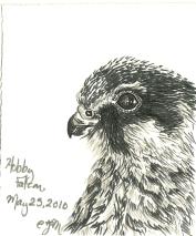 2010.5.25 Hobby Falcon
