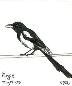 2010.5.27 Magpie