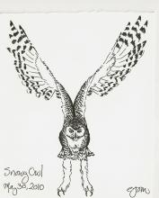 2010.5.30 Snowy Owl