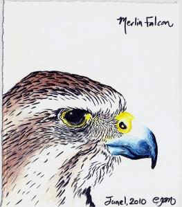 2010.6.1 Merlin Falcon