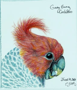 2010.6.10 Gang Gang Cockatoo