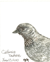 2010.6.13 California Towhee