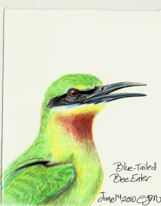 2010.6.14 Blue Tailed Bee Eater