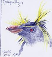 2010.6.16 Rockhopper Penguin