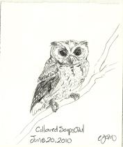 2010.6.20 Collared Scops Owl