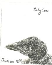 2010.6.21 Baby Crow