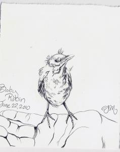 2010.6.22 Baby Robin