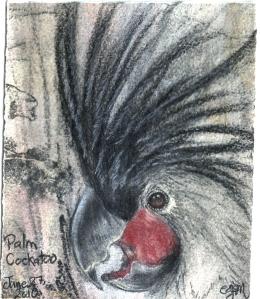 2010.6.27 Palm Cockatoo