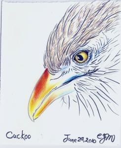 2010.6.29 Cuckoo