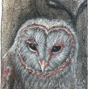 2010.7.16 Barn Owl