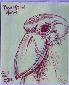 2010.7.18 Boat Billed Heron