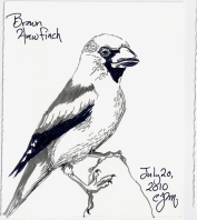2010.7.20 Brown Hawfinch