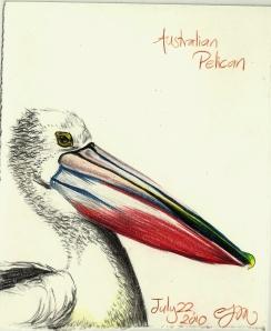 2010.7.22 Australian Pelican