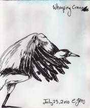 2010.7.23 Whooping Crane