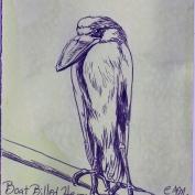 2010.7.26 Boat Billed Heron
