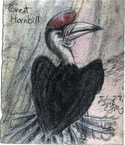 2010.7.27 Great Hornbill