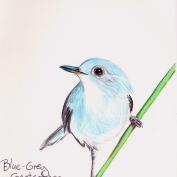 2010.7.6 Blue Grey Gnatcatcher