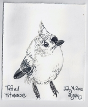 2010.7.7 Tufted Titmouse