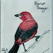 2010.7.9 Scarlet Tanager