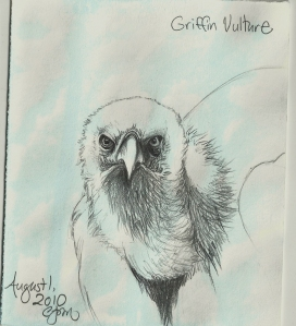 2010.8.1 Griffon Vulture